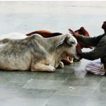 هندوس يهاجمون زوجين مسلمين لاشتباههم بأنهما يحملان لحم بقر