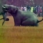 بالفيديو والصور: فيل غاضب يقتل رجل بالهند