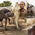 بالصور: سكان بلدة بجنوب السودان يعالجون أمراضهم ببول البقر و شجر الخوخ