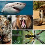 كيف يمكنك إنقاذ حياتك إن هاجمك حيوان مفترس؟