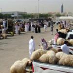 لهذه الأسباب سوق الأغنام في المملكة يمر بمرحلة كساد..والأسعار تنخفض 46 %