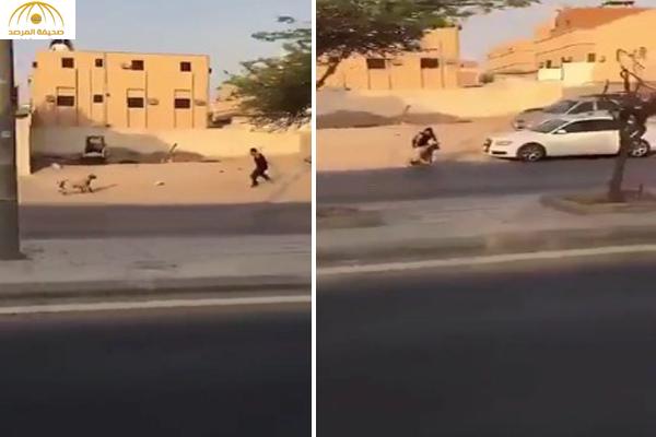 بالفيديو : شاهد ماذا حدث لخروف هرب من مالكه على طريق سريع