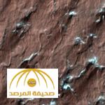 اكتشاف سر عناكب المريخ