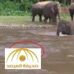 بالفيديو : شاهد كيف تصرَّف فيل عند رؤية رجل يغرق في النهر
