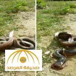 شاهد .. كيف تمكَّن مواطن من قتل ثُعبان ضخم في بلجرشي
