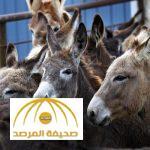 طبيبة مصرية : كل المصريين أكلوا لحم حمير  مئة في المئة