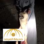 """بالفيديو : مصرع """"ذئب"""" على يد مواطن بعدما هاجمه أثناء نومه"""