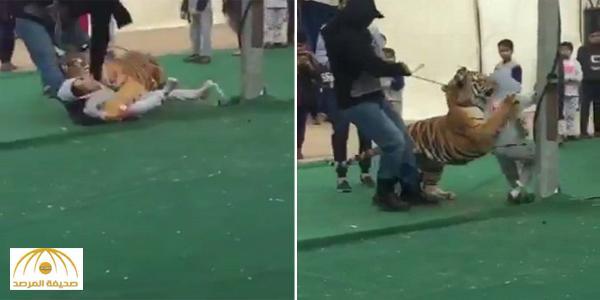 بالفيديو : لحظة هجوم نمر على طفلة في سكاكا