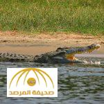 وزير مصري يعد برنامجا لبيع تماسيح النيل للمساعدة في حل الأزمة الاقتصادية!