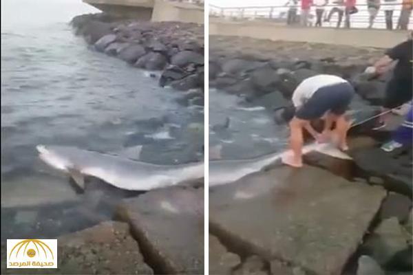 """بالفيديو .. لحظة اصطياد سمكة """" قرش """" كبيرة بكورنيش جدة"""