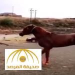 بالفيديو:مواطن يحاول ترويض حصان بالقوة وهذه كانت النهاية!