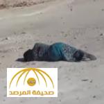 شاهد فيديو يوثق جرائم روسيا والنظام السوري في مدينة حلب