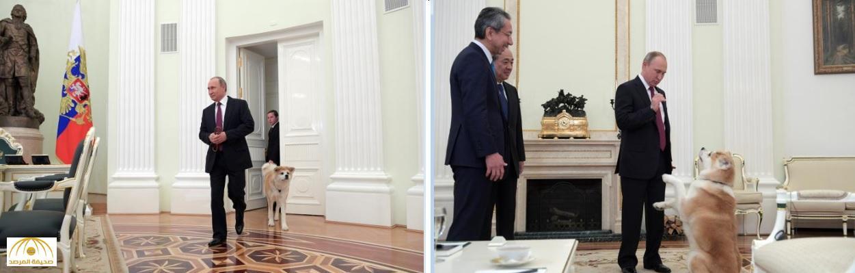 """""""يومي"""" في اليابان.. ماذا فعلت كلبة """"بوتين"""" مع الإعلاميين في طوكيو ؟ – صور"""