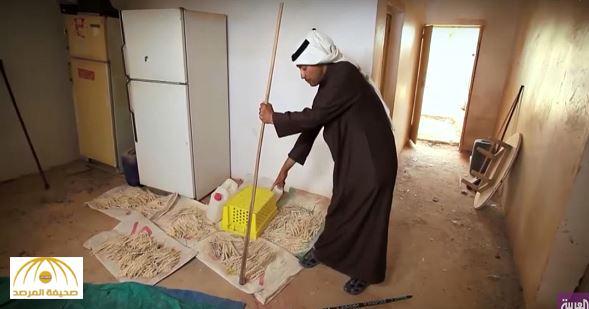 بالفيديو.. باحث سعودي يروي قصة وفاة جدته بسبب لدغة ثعبان