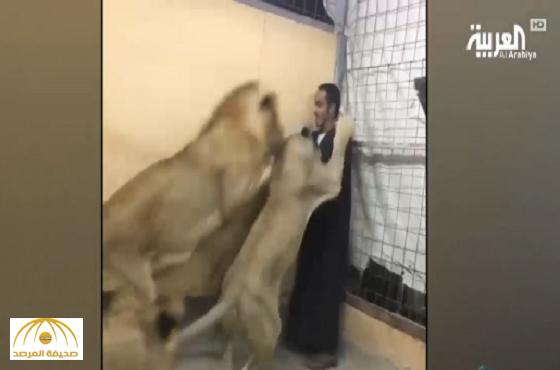 بالفيديو.. شاب سعودي يتحدث للحيوانات المفترسة ويصدر أوامره لها وهي تنفذ!