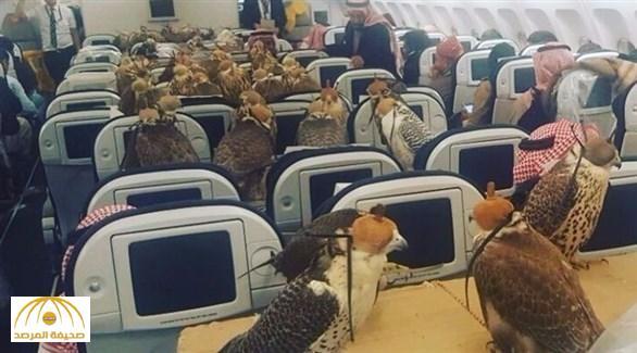 رجل أعمال سعودي يحلق مع 80 صقراً على متن إحدى الطائرات  – صورة