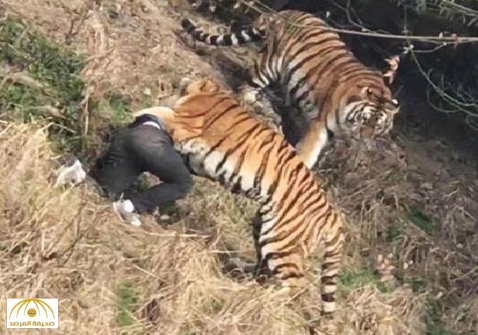 بالفيديو: نمر يفترس رجل أمام زوجته وأطفاله داخل محمية طبيعية في الصين