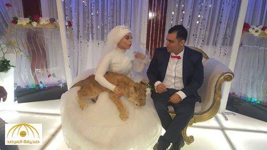 """بالصور .. عروس مصرية تفاجئ عريسها والمدعوين بـ """"أسد"""" في حفل الزفاف .. كيف كانت ردة فعلهم ؟"""