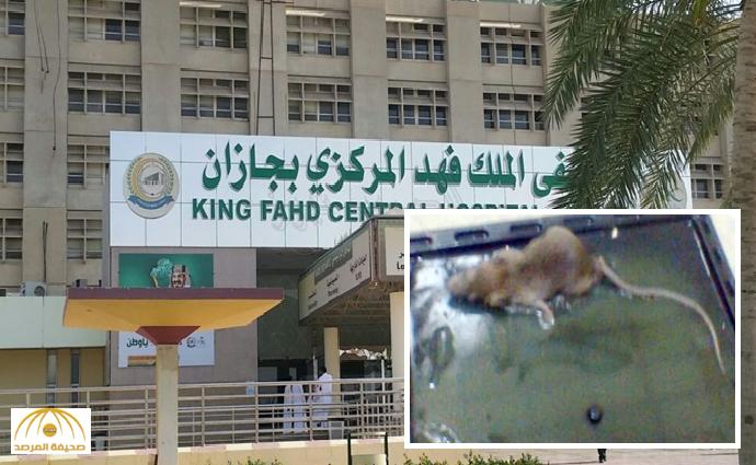 سرب من الفئران يهاجم مريضة منومة في «مركزي جازان».. والصحة تحقق!