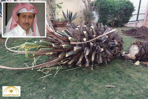 """القصبي ينشر صورًا لاقتلاع """"النخلة"""" التي ماتت تزامنا مع وفاة والده !"""