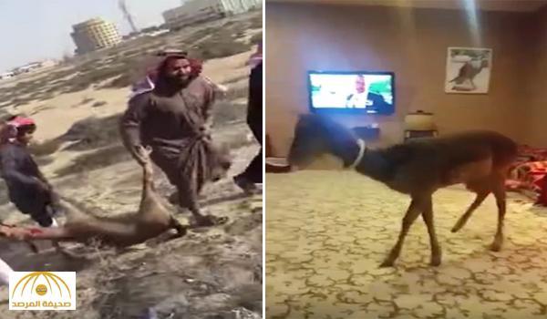 """مالك الغزال المختفية يتهم """"إمام مسجد"""" بخطف غزاله وأكله .. ويكشف قراره بشأنه – فيديو"""