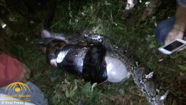 شاهد .. فيديو وصور مرعبة لجثة رجل كاملة داخل ثعبان !