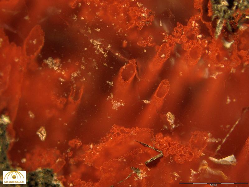 بالصور.. هذا أقدم دليل على وجود حياة في الأرض قبل 3 مليار سنة