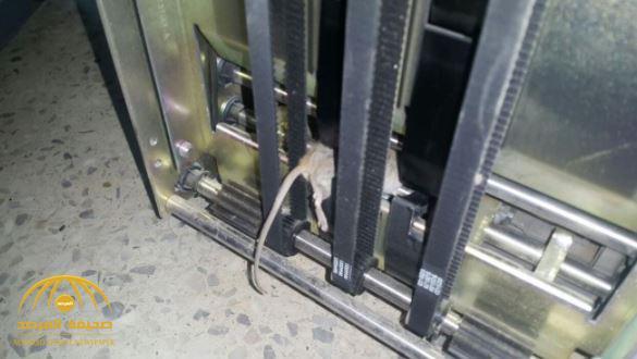بالصور.. فأر يتلف مبالغ من الريالات عقب تسلله لإحدى ماكينات الصرافة