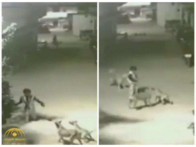 """بالفيديو:شاهد كيف  تعامل """"طفل""""مع  هجوم شرس لمجموعة من الكلاب !"""