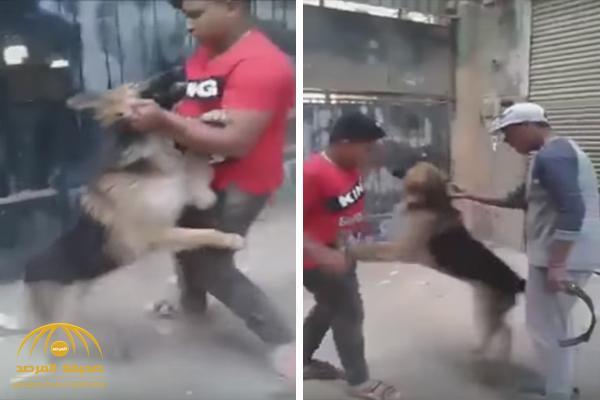 فيديو: شاهد طفل مصري يتصارع مع كلب مفترس و يمسك بأذنيه ورقبته وينطحه برأسه !