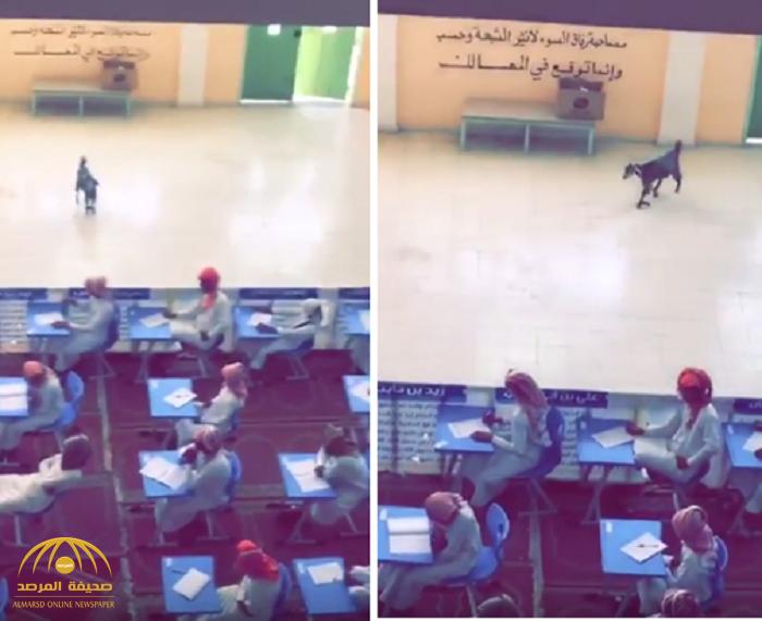 شاهد.. ماعز تقتحم قاعة أثناء اختبار الطلاب!