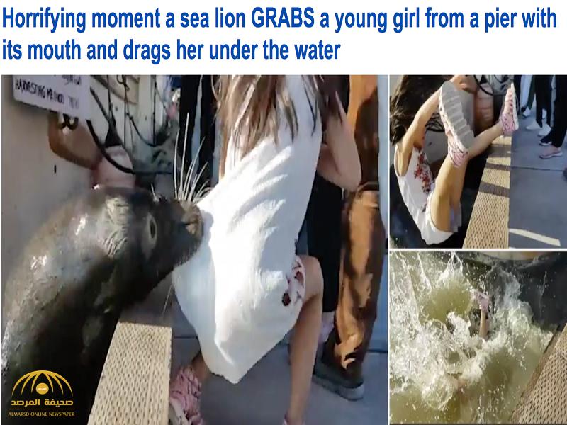 فيديو :أسد البحر يسحب طفلة ويهرب بها تحت الماء!