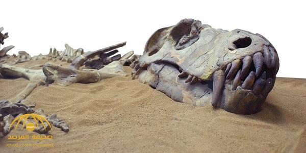 بالصور : هكذا يبدو آخر ديناصورات إفريقيا قبل انقراضه بـ66مليون عام.. ذراعاه قصيرتان للغاية!