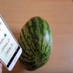 الأمر ليس مزحة ولا صدفة.. شاهد تطبيق جديد يساعدك في اختيار البطيخ الحلو خلال ثوان!