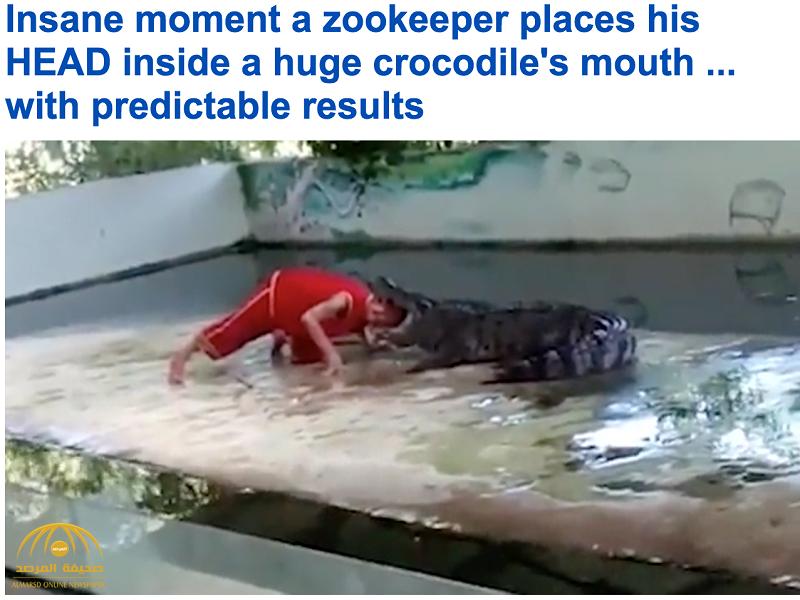 فيديو: تمساح يخدع حارس حديقة حاول إدخال رأسه بين فكيه أثناء عرض للجمهور..فكانت النتيجة مرعبة