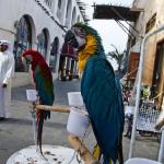 صحيفة وول ستريت جورنال من داخل الدوحة:الوضع المعيشي والاقتصادي في قطر مخيف!