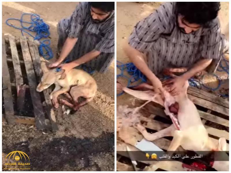 فيديو:بعد نحره وسلخه…شاهد..مجموعة من الأشخاص يطبخون ذئب ويأكلونه