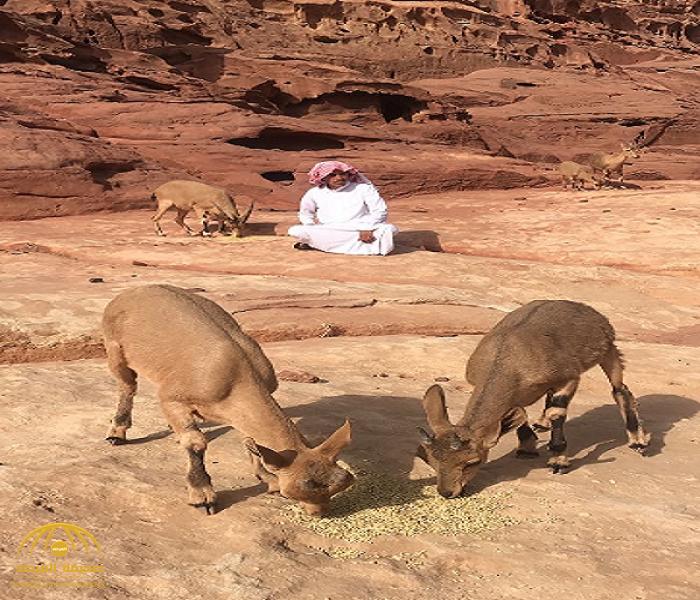 """صورة على """"التواصل"""" تقلب حياة شاب سعودي رأسا على عقب.. وهكذا فضل حياة الجبال قبل 3 أعوام! -صور"""
