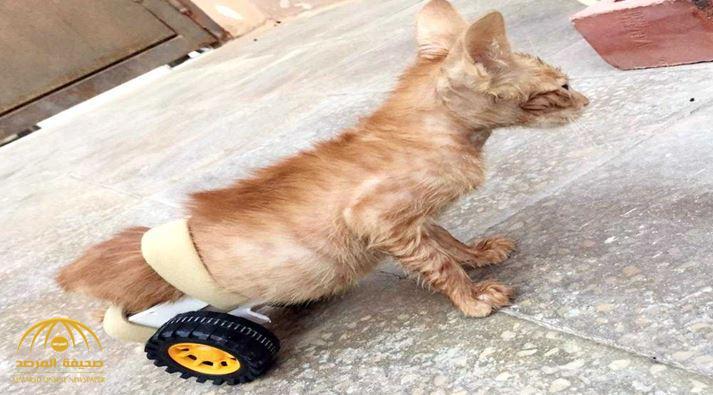 """شاب سعودي يشعل """"التواصل"""" بتصرفه تجاه قطة مصابة بالشلل.. ويروي التفاصيل!"""