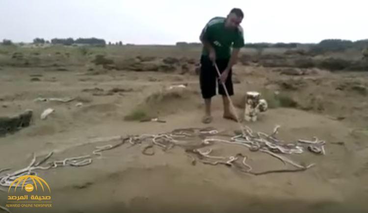 شاهد .. مئات الثعابين تهاجم مزرعة مواطن بجازان
