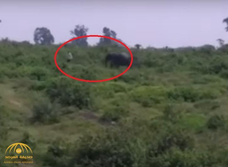 """شاهد بالفيديو: نهاية مأساوية لرجل حاول التقاط """"سيلفي مع فيل""""!"""