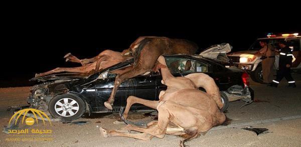 صور وفيديو: شاهد.. ماذا فعلت جمال سائبة اعترضت سيارة فجأة على طريق العقير بالأحساء