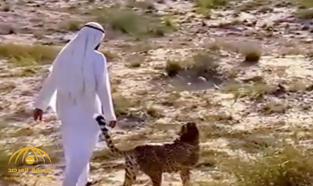 شاهد ..محمد بن راشد آل مكتوم يروض فهدًا ويصطحبه معه في صحراء الإمارات