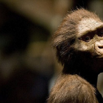 بالصور:أسنان عمرها 9 ملايين عام تقلب الموازين.. من أفريقيا لأوروبا