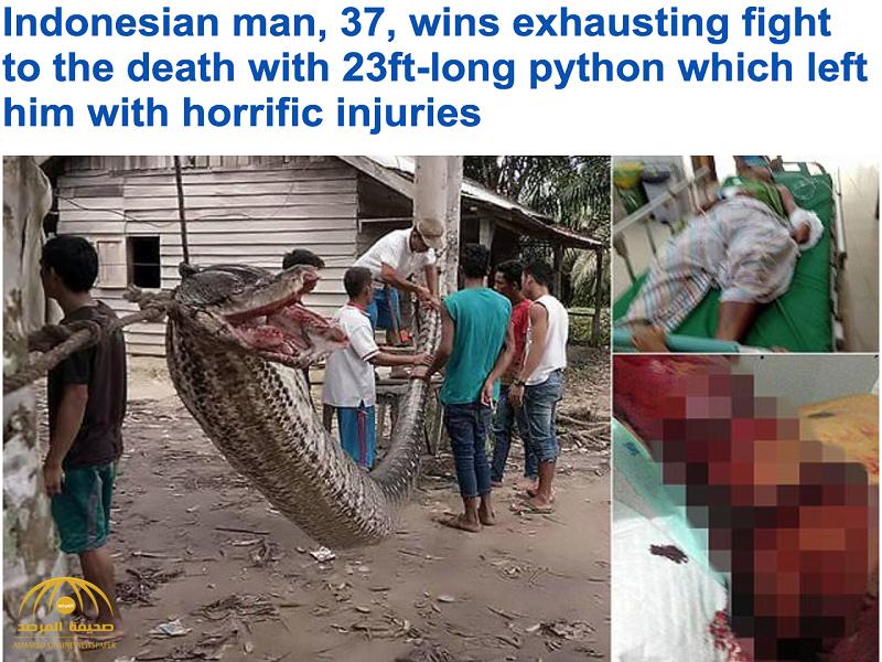 بالصور:معركة عنيفة بين شاب و ثعبان ضخم في إندونيسيا..شاهد مصير كلٍ منهما!