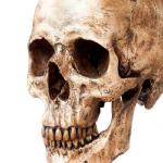 جمجمة تكشف أسرارا عن الجنس البشري وتسونامي!