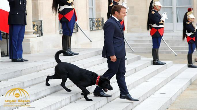 بالفيديو: كلب الرئيس الفرنسي يضعه في مأزق شديد الحرج أمام ضيوفه.. ماذا فعل؟