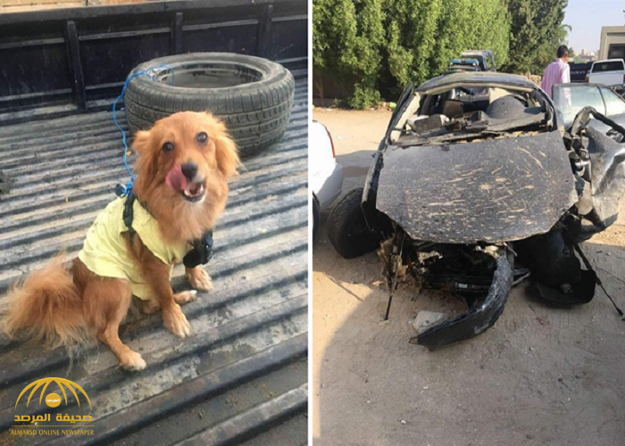 الكلب الناجي الوحيد من الحادث.. شاهد صور السيارة التي شهدت مصرع الفنانة داليا التوني!