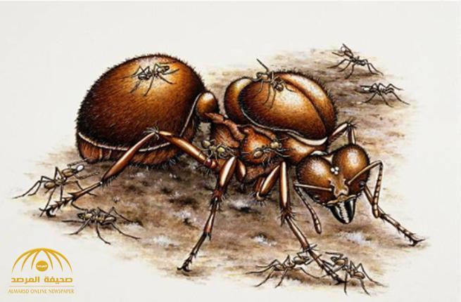 مصدر يوضح ملابسات قضية دهس النملة بمحكمة عفيف.. ويكشف: هكذا جاء رد القاضي على الدعوى !
