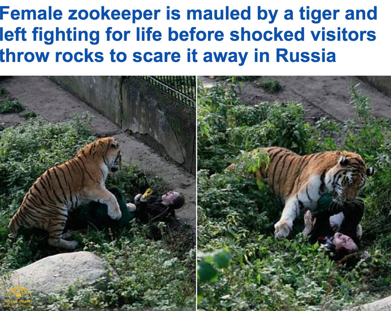 بالصور : نمر ينقض على راعيته الروسية أثناء تقديمها الطعام له و محاولات لانقاذها